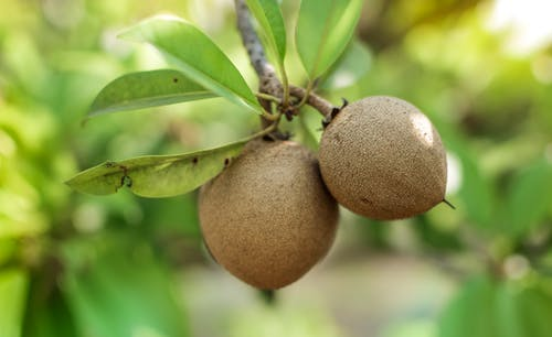 Gratis stockfoto met fruit