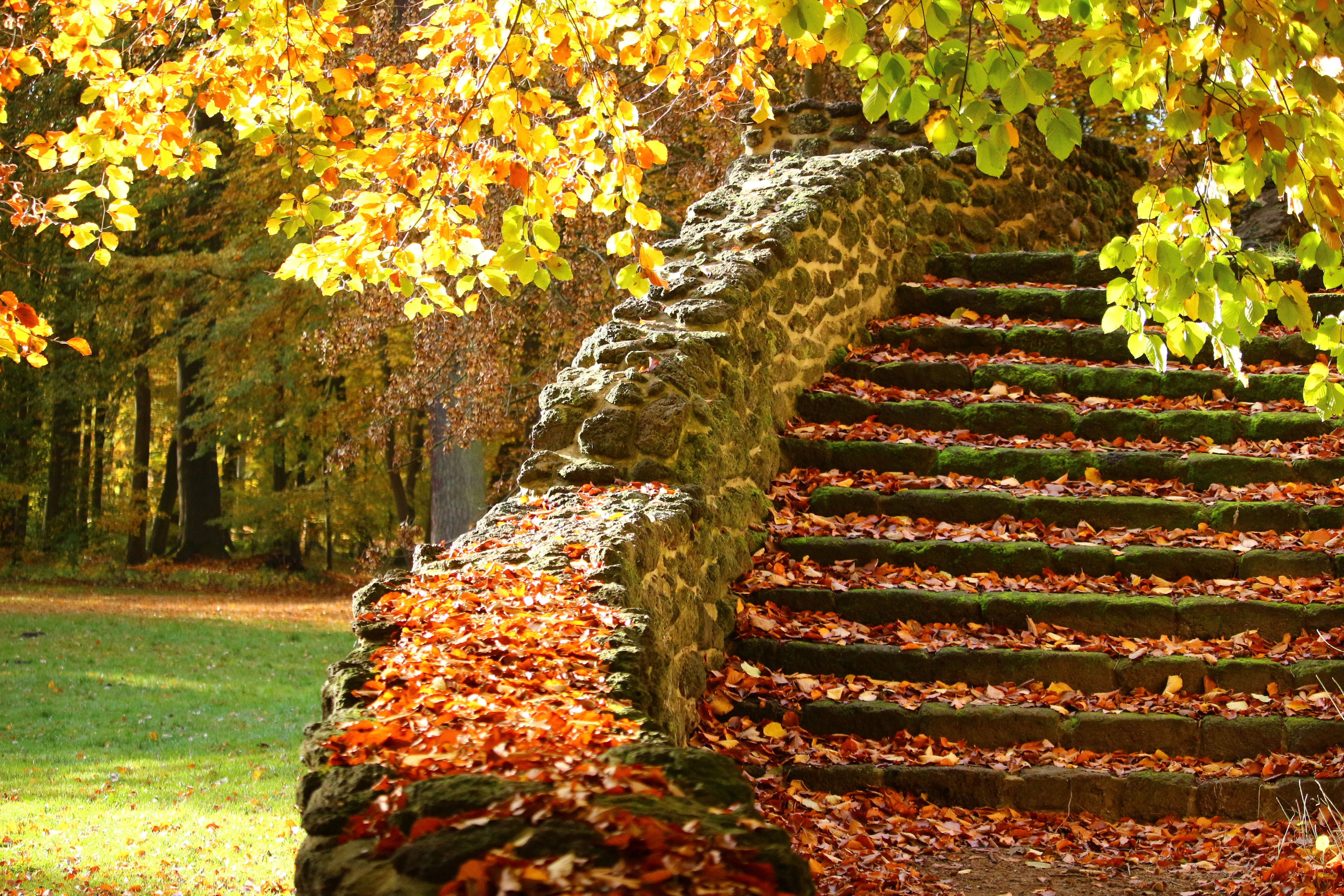 Stairs With Leaves