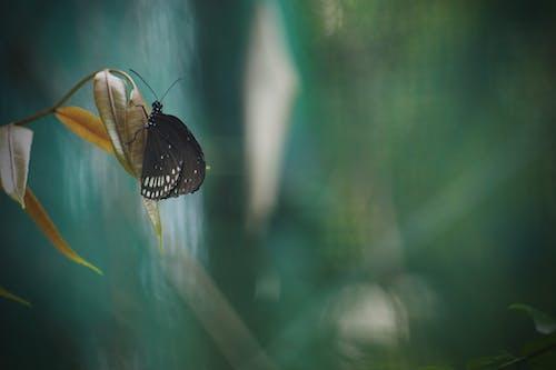 Ảnh lưu trữ miễn phí về bướm trên hoa, Con bướm, con vật, vườn bách thú