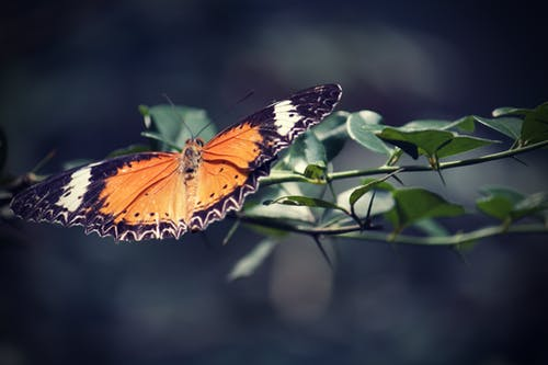Ảnh lưu trữ miễn phí về bướm, bướm trên hoa, Thảo Cầm Viên, vườn bách thú