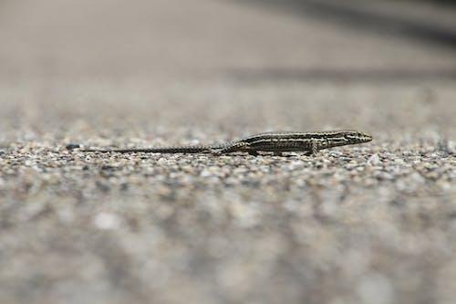 Gray Reptile