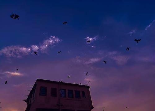 Fotobanka sbezplatnými fotkami na tému modrá obloha, obloha pokrytá oblakmi, vtáky