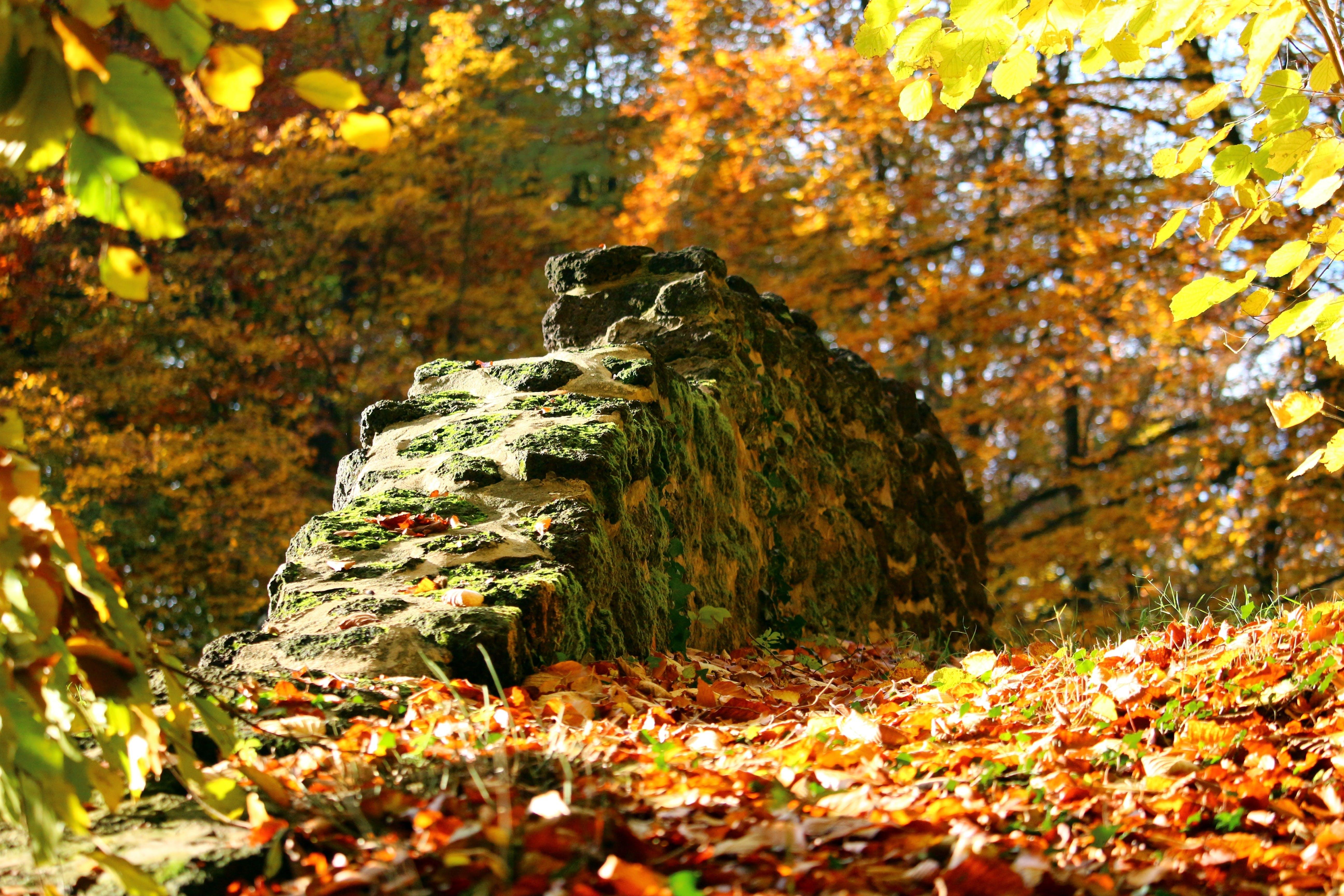 Free stock photo of autumn, stone wall, fall foliage, grotto