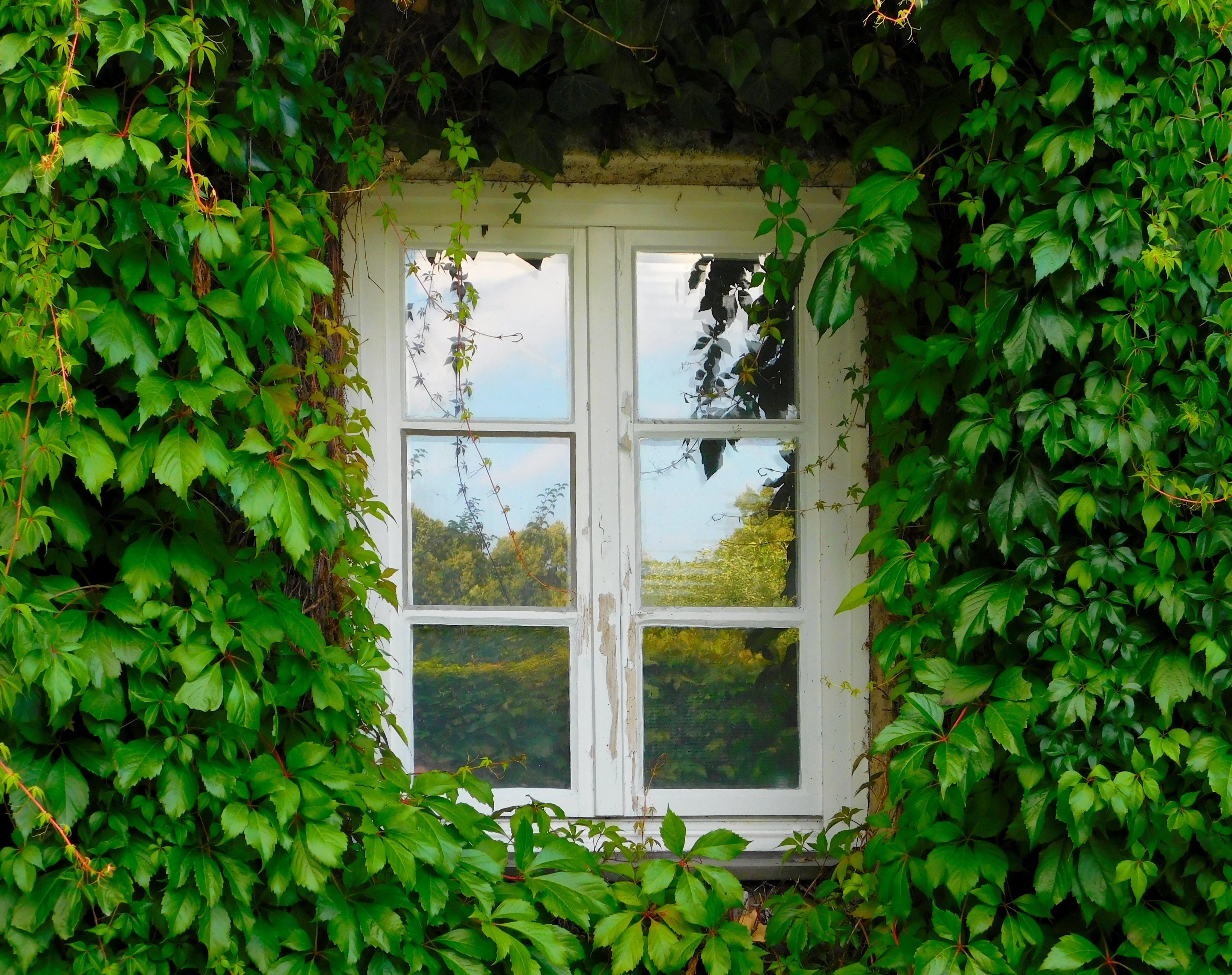 Free stock photo of wall, plant, window, green