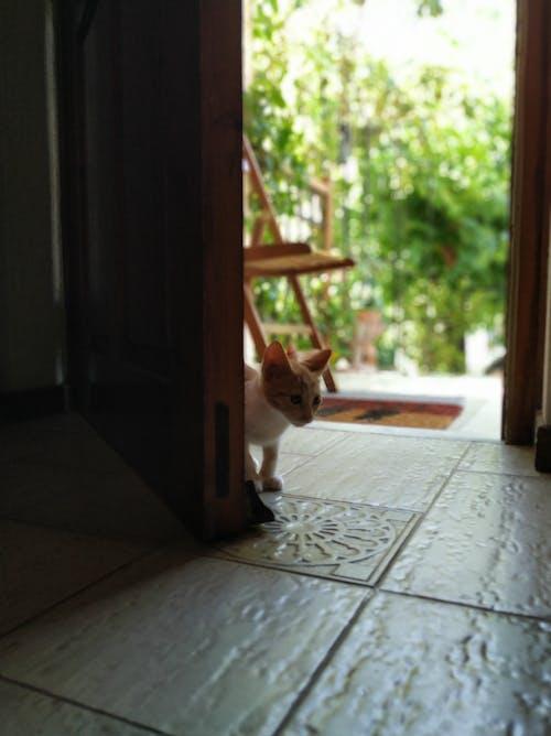 Free stock photo of cat, door, kittens