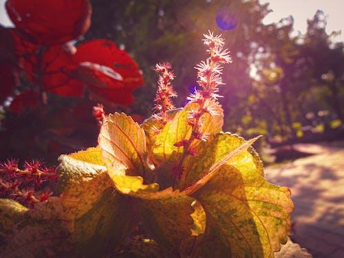 4k 바탕화면, 꽃, 배경이 흐린, 스톡 사진의 무료 스톡 사진