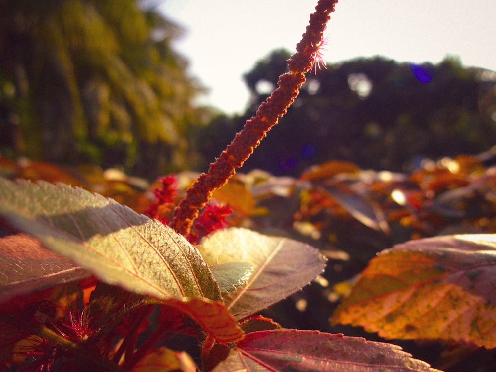 4k ταπετσαρία, κόκκινο λουλούδι, ομορφιά στη φύση