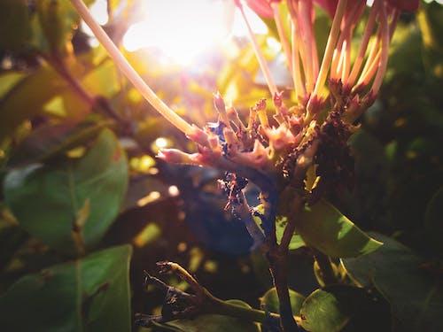 4k 바탕화면, 붉은 꽃, 아름다운 꽃, 짙은 녹색의 무료 스톡 사진