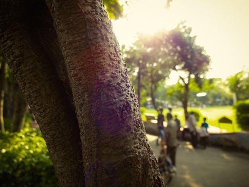 4k 바탕화면, 사과나무, 자연의, 자연의 아름다움의 무료 스톡 사진