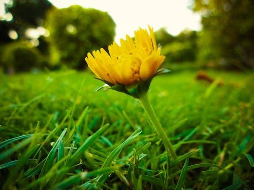 노란 꽃, 블루, 자연미의 무료 스톡 사진