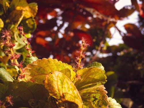 4k 바탕화면, 아름다운 눈, 자연미의 무료 스톡 사진