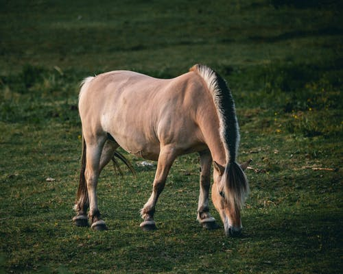 Brown Horse Standing on Green Grass