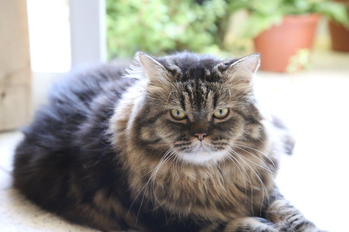 Free stock photo of Ary the cat, cat, feline