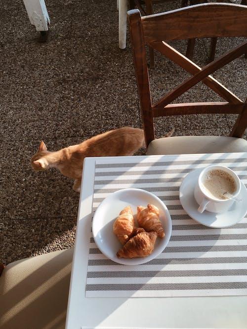 Gratis lagerfoto af bord, Grækenland, kaffe, katte