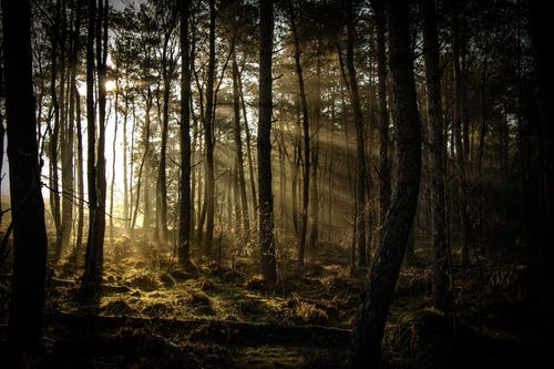 Photos gratuites de aube, automne, bois, brouillard
