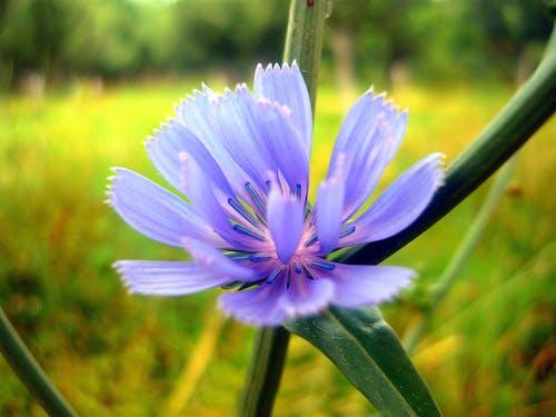 Free stock photo of beautiful flowers, blue flowers