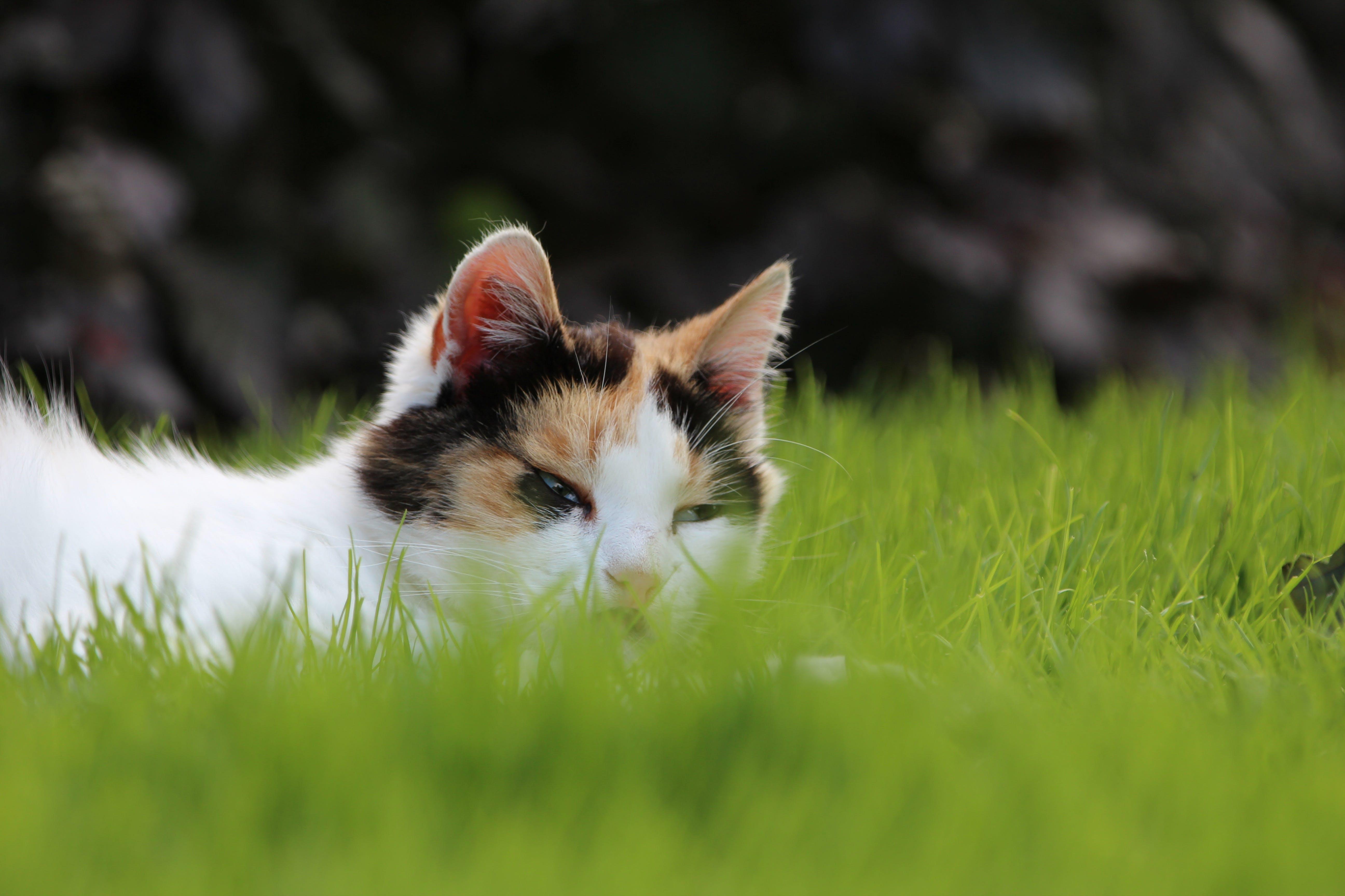 Free stock photo of animal, cat, cats, dreams