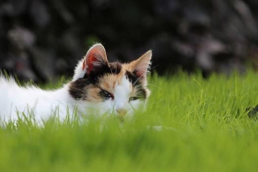 Free stock photo of animal, grass, spring, green