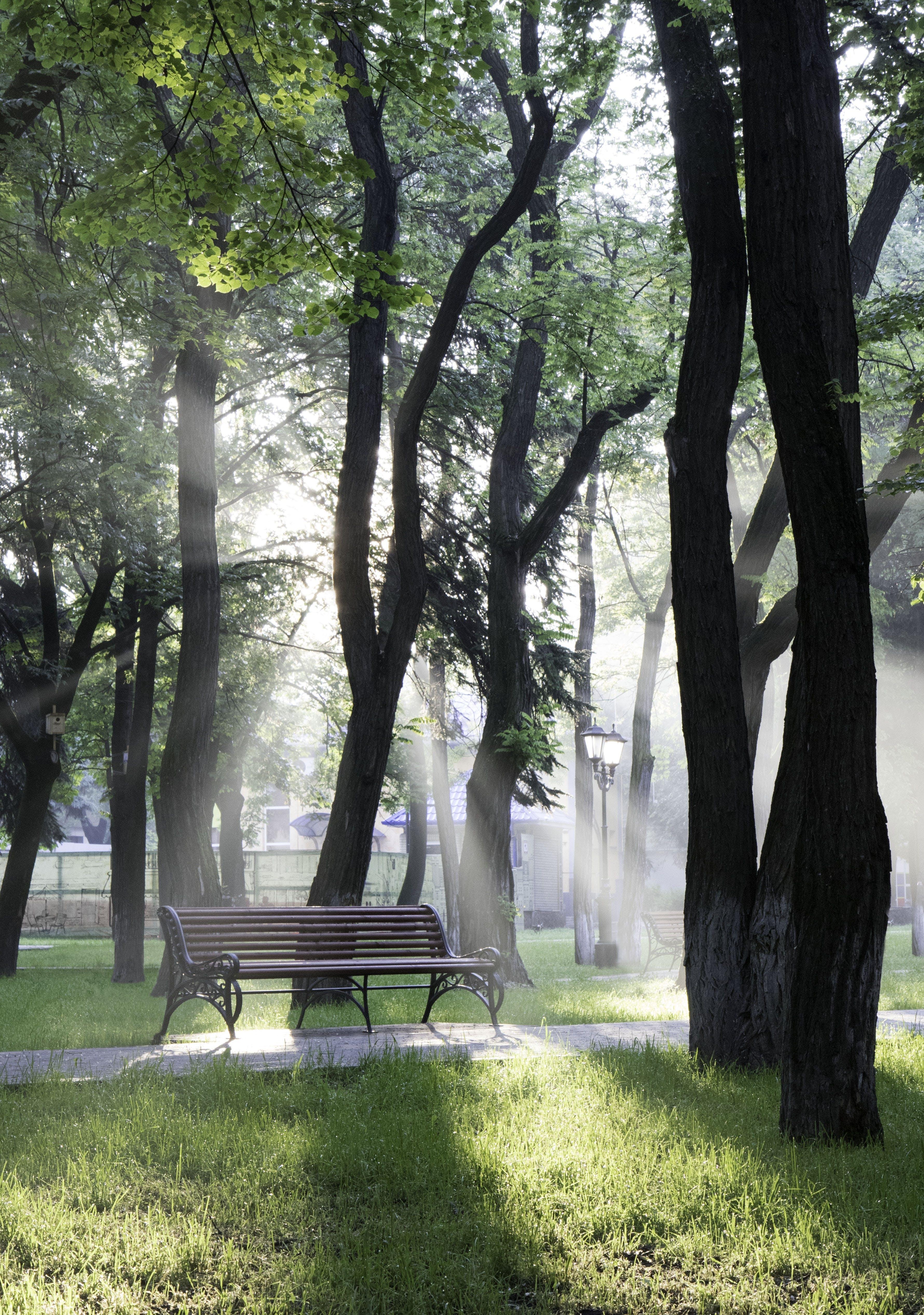 Бесплатное стоковое фото с деревья, дорожка, дымка, легкий
