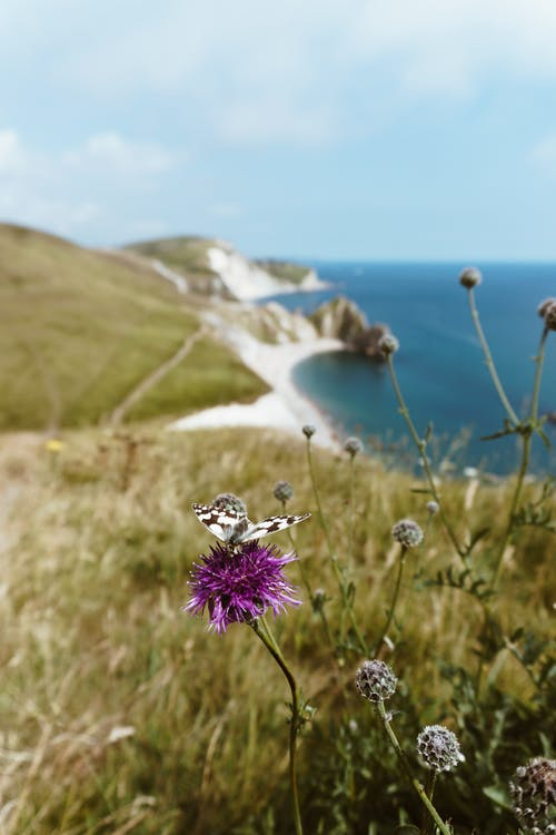 경치가 좋은, 곤충, 꽃가루, 꽃이 피는의 무료 스톡 사진