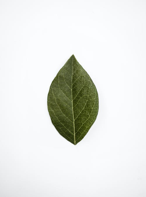 Kostnadsfri bild av ådror, blad, färsk, friskhet