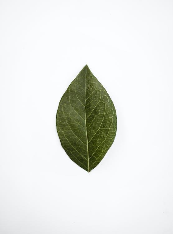 ådror, blad, färsk