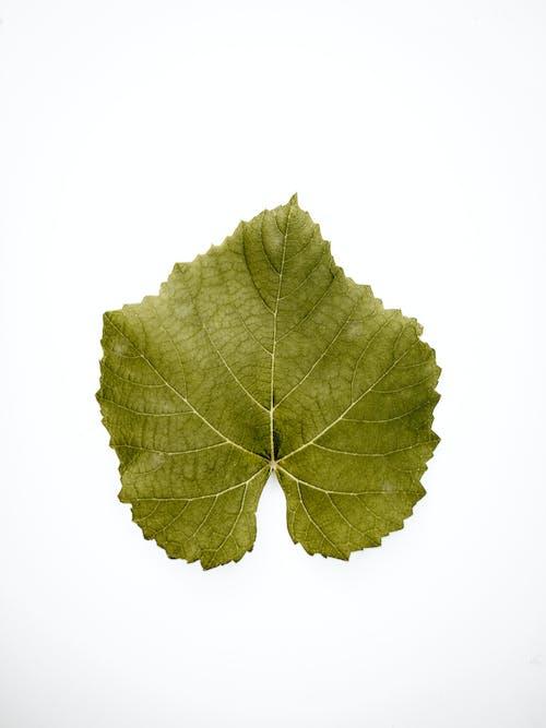 Gratis arkivbilde med blad, farger, fokus, grønn