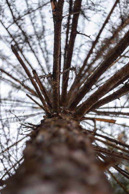 分公司, 分支機構, 樹, 樹皮 的 免費圖庫相片