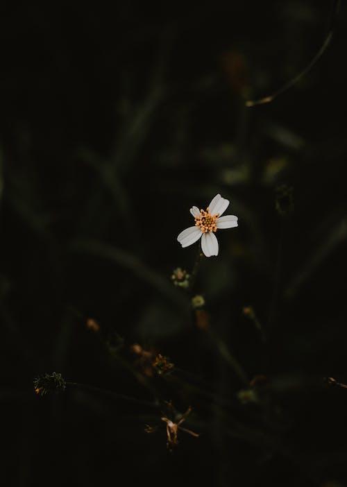 Gratis stockfoto met bloeiende plant, bloeiende planten, donkergroen, donkergroene planten