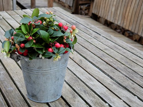 Red Cherry and Bucket