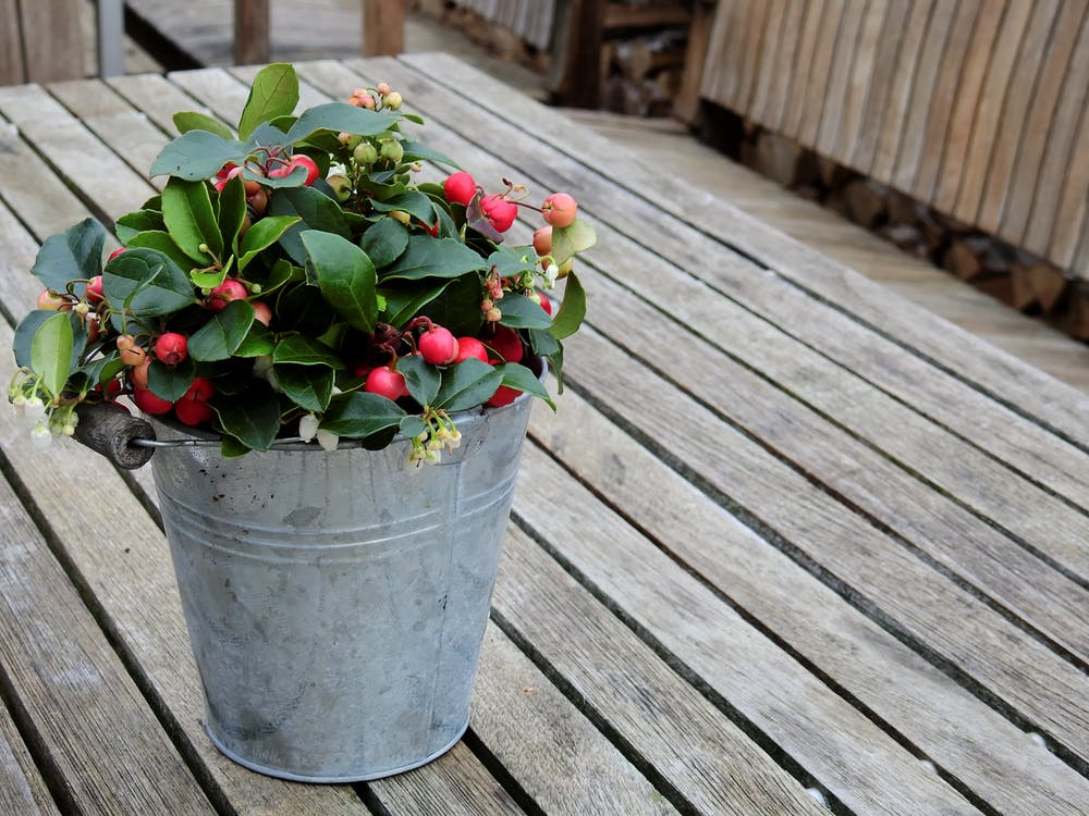 Galvanized Bucket Planters | Smart Small Space Gardening Ideas For The City Dwellers