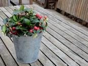 wood, flowers, summer