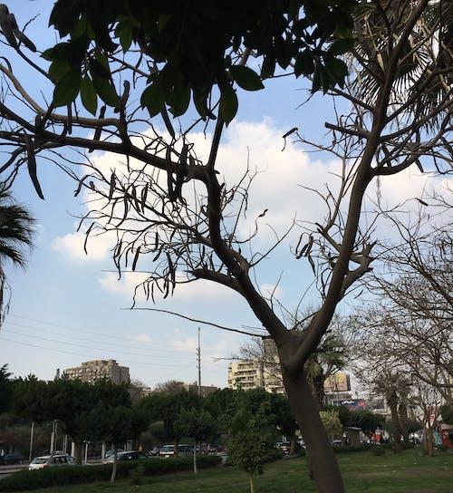 cloudtree, 可愛的, 哇, 漂亮 的 免費圖庫相片
