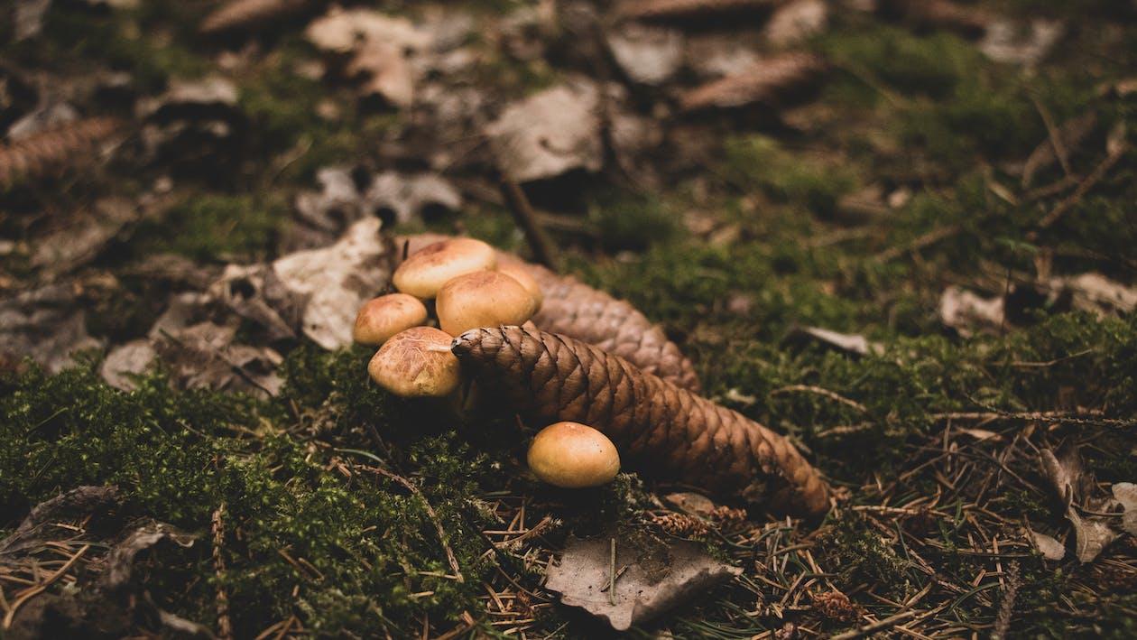 kärpässienet, sienet, sieni