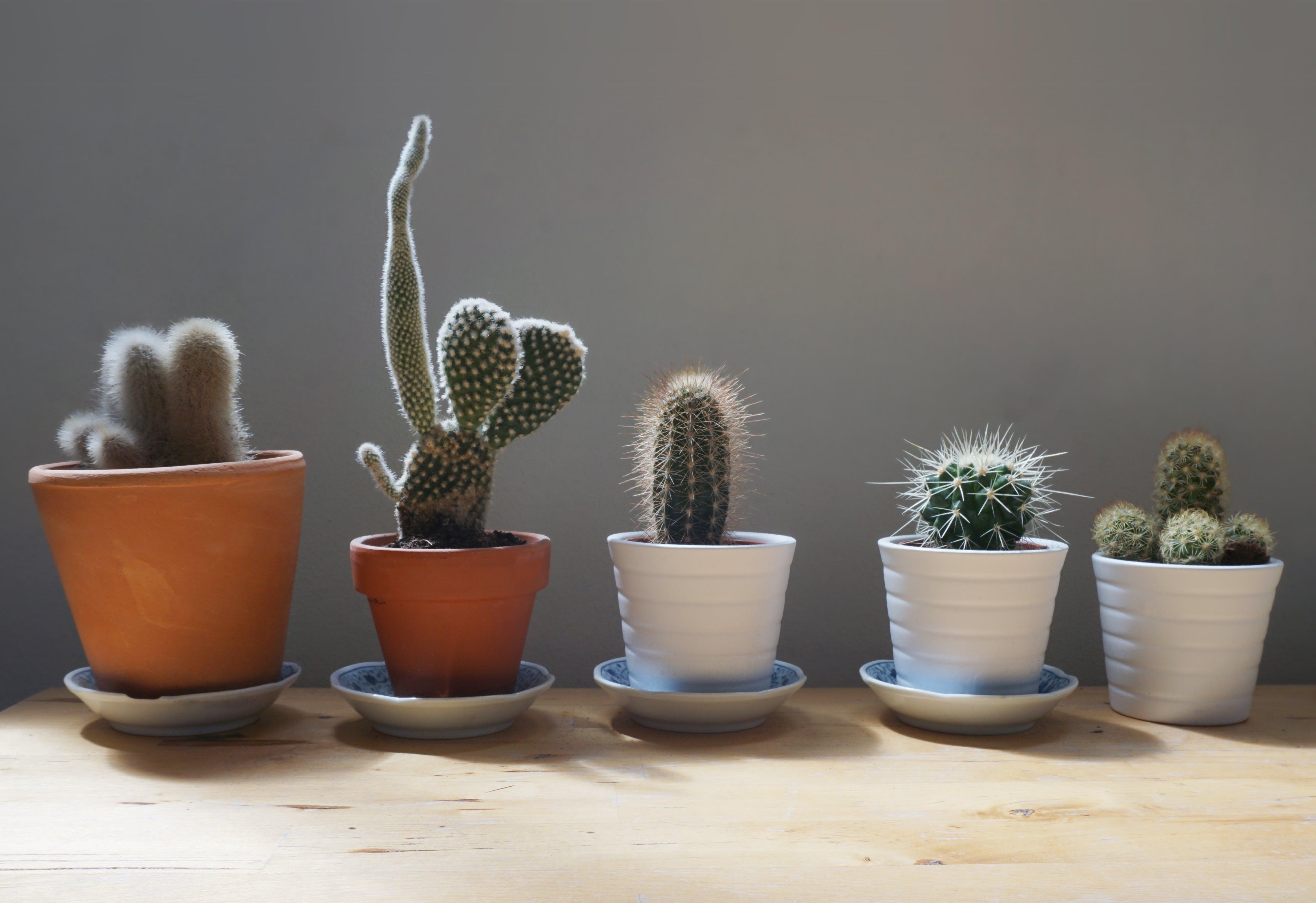 blur, cactus, close-up