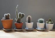 plant, table, blur