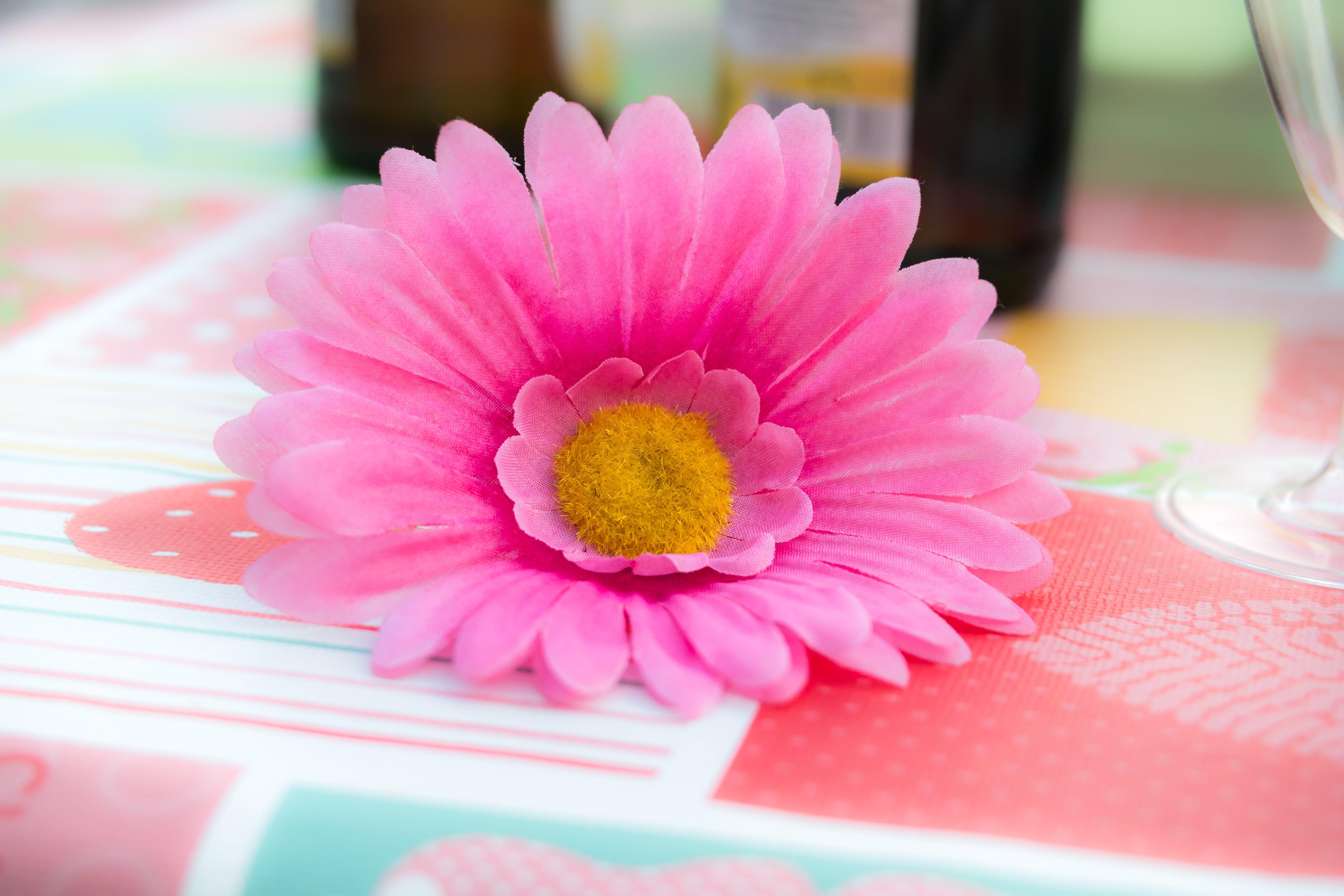 Free stock photo of birthday, bloom, blossom, celebration