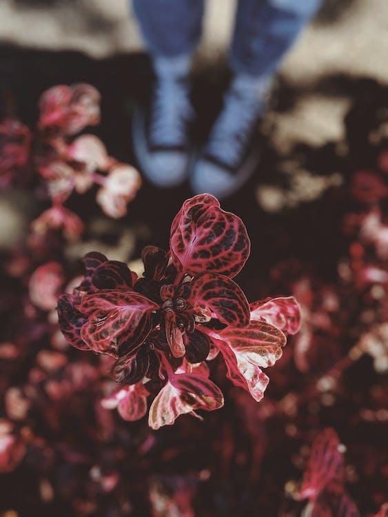 blade, Botanisk, dybde