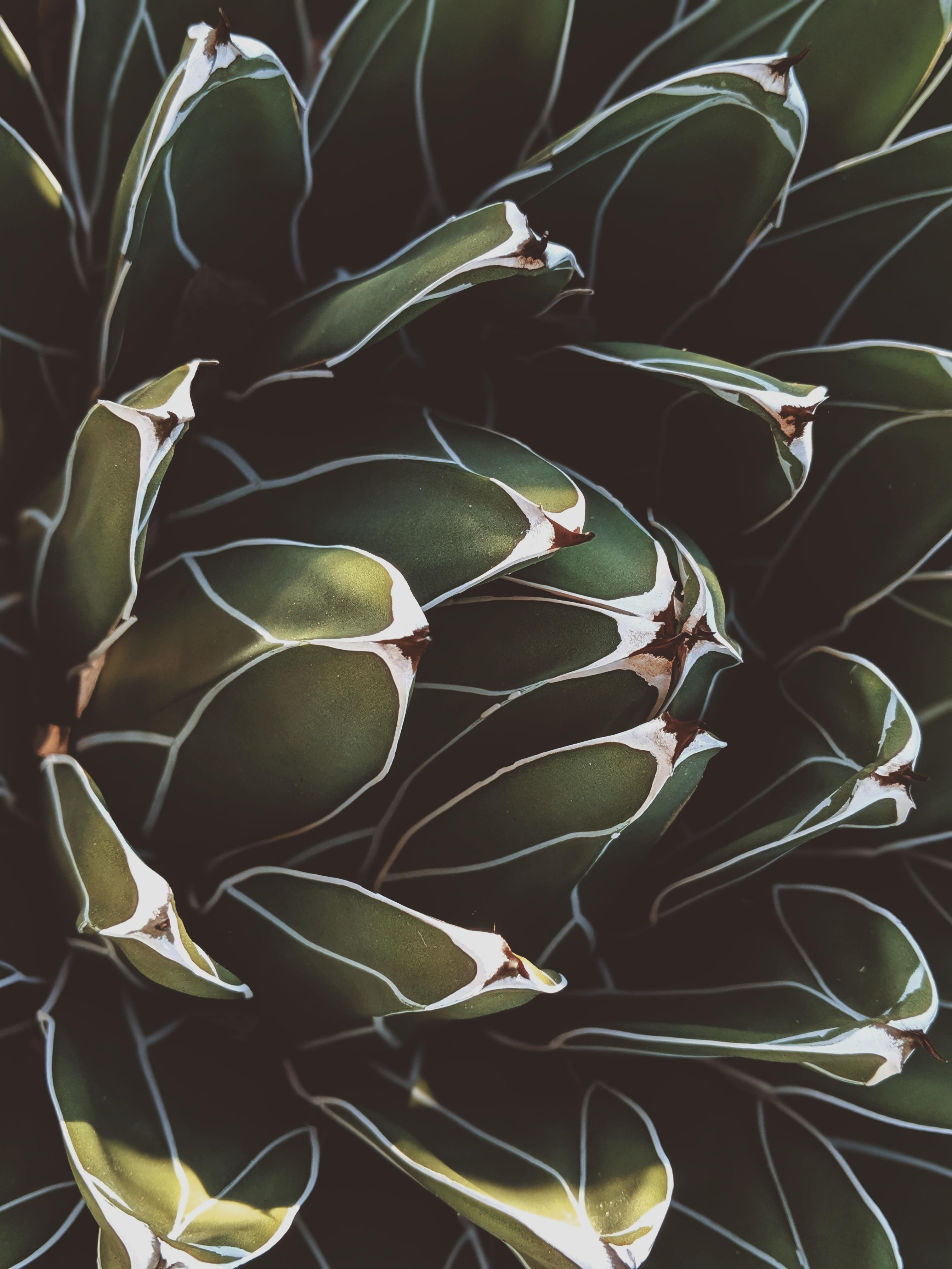 best soil for succulents