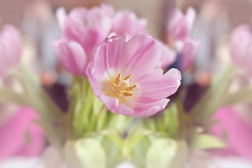 Kostnadsfri bild av blommor, flora, HD tapeter, kronblad