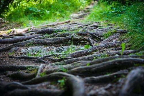 Безкоштовне стокове фото на тему «дерева, дерево, завод, зелений»