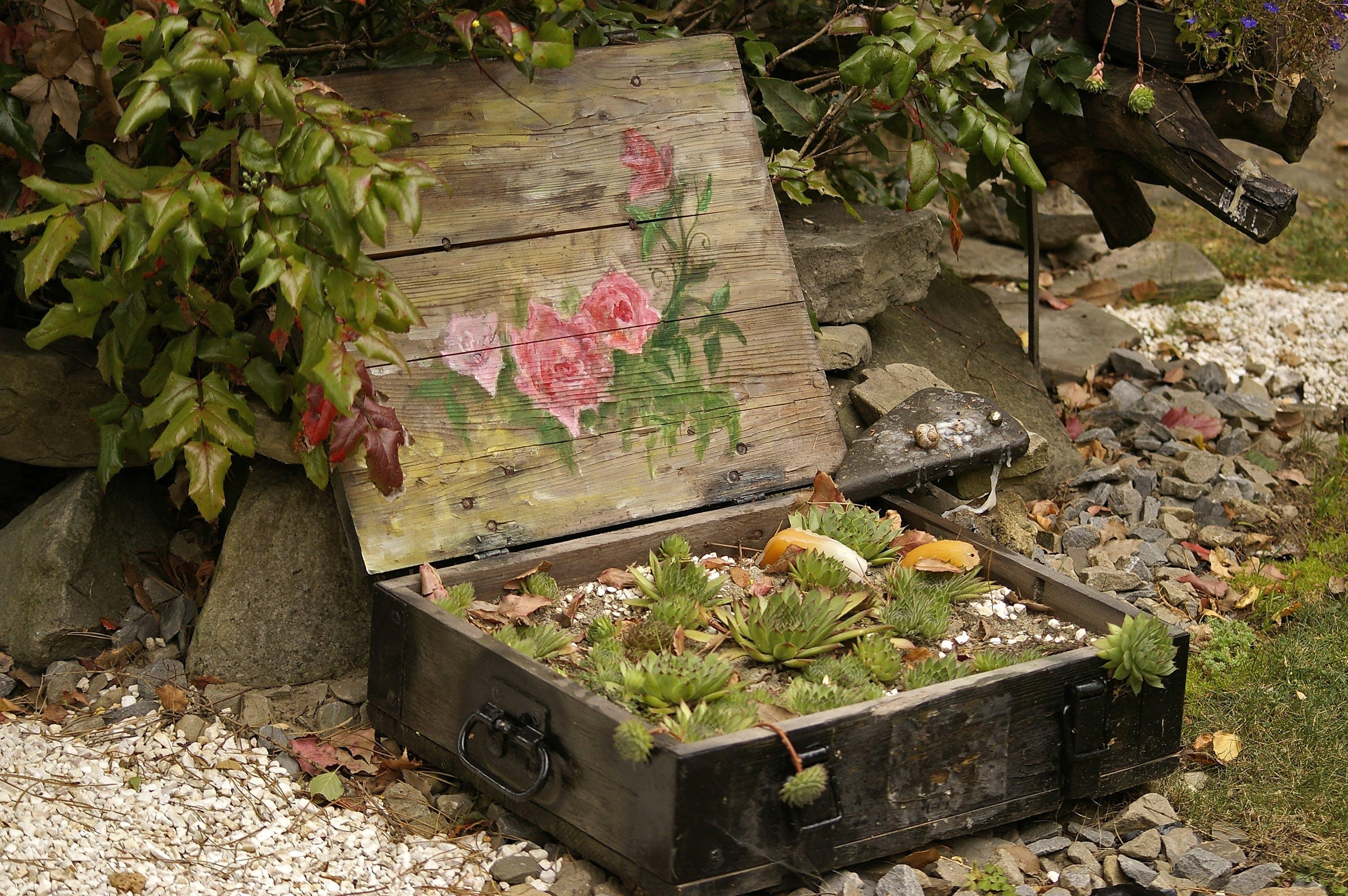 Free stock photo of arrangement, garden, garden plants, plants