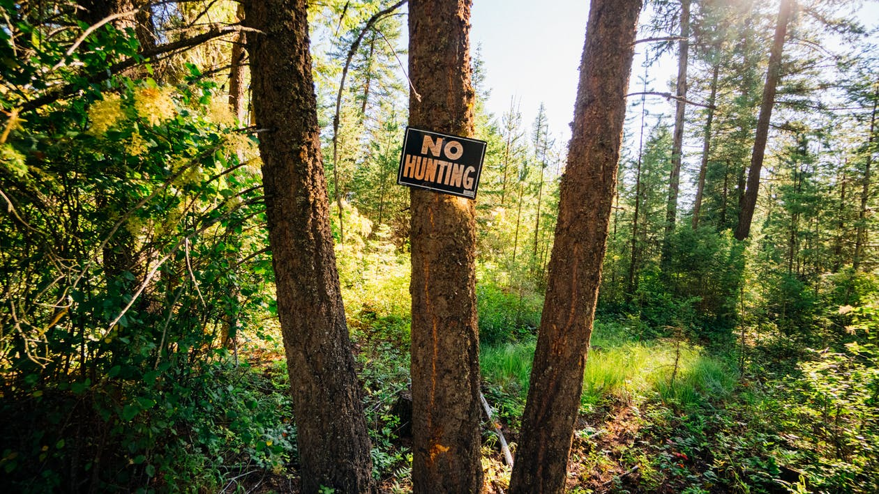 HD-обои, вывески, деревья