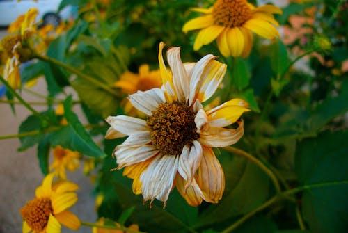 Kostenloses Stock Foto zu blumen, blüte, blütenblätter, blütenstaub