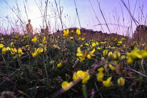 Free stock photo of evening sun, flowers, macro photo, macro photography