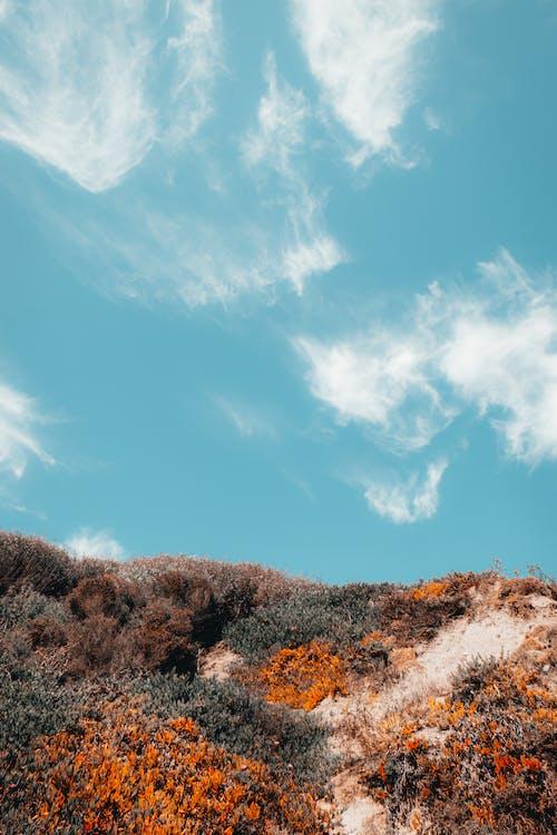 Základová fotografie zdarma na téma 35mm, barva, bujný, cestování