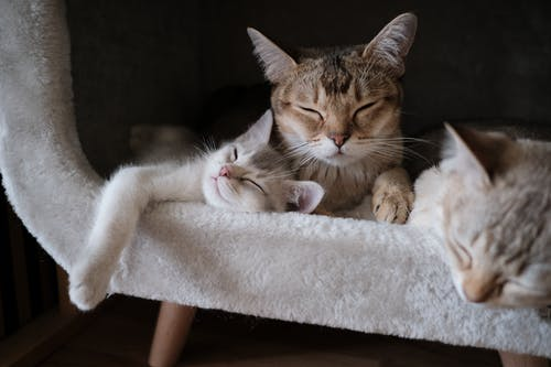 Close-Up Photo of Tabby Cats Sleeping
