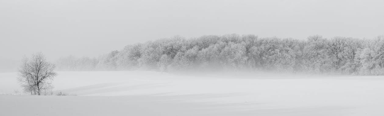 arbres, blanc, bois