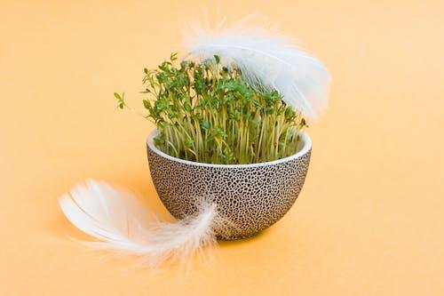 不相連的, 修剪花草, 增長, 夏天 的 免费素材照片