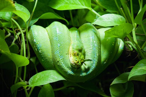 Close-Up Photo of Green Snake on Leaves